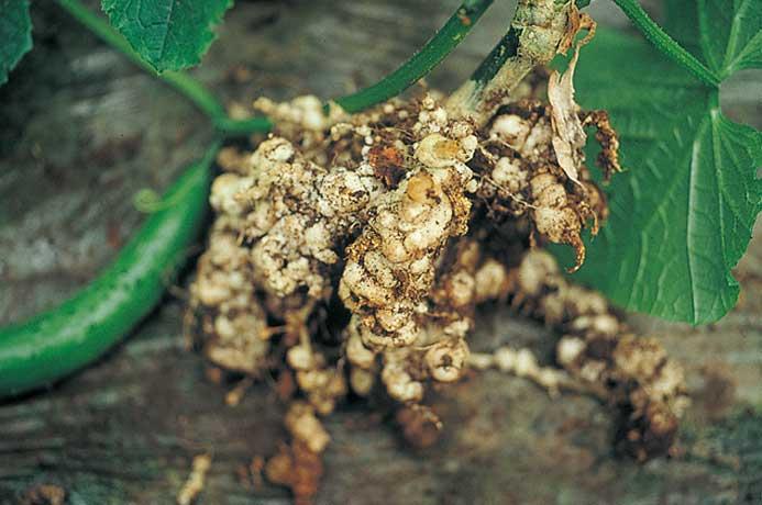 虫 農薬 線